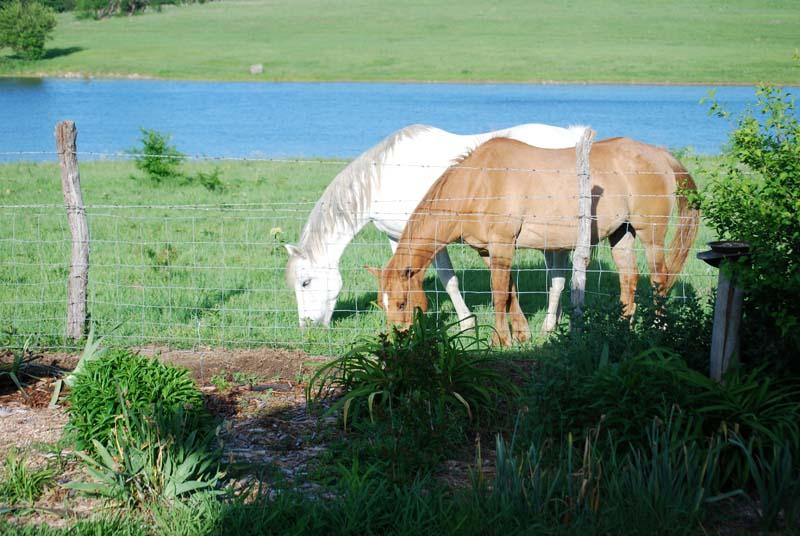 HorsesApr24