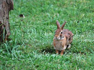 RabbitMay13
