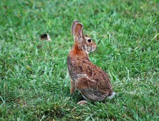 RabbitMay13b