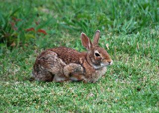 RabbitMay13c