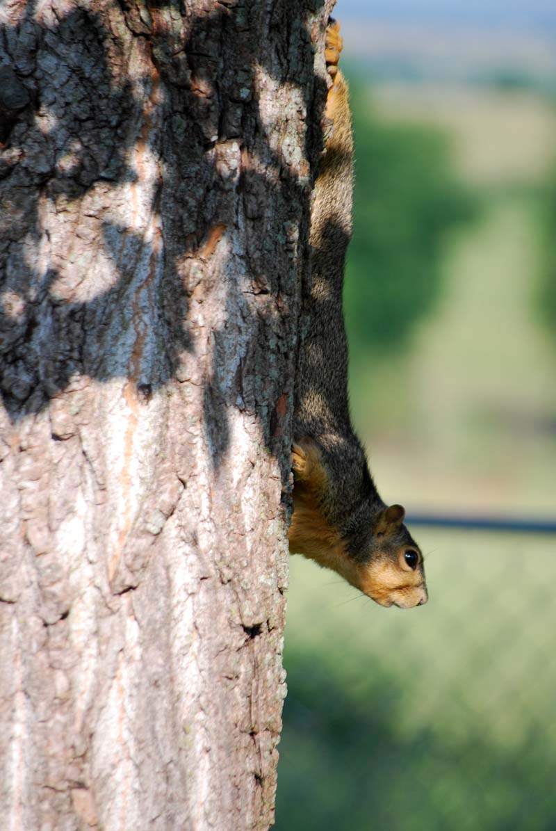 SquirrelMay19j