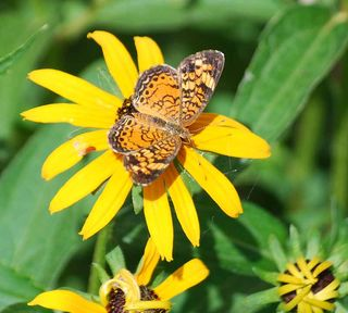 ButterflyJul4