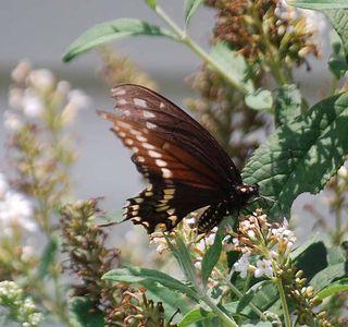 ButterflyJul10
