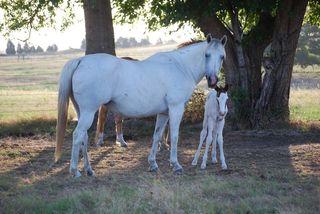 HorsesJul17