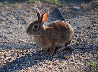 RabbitAug20