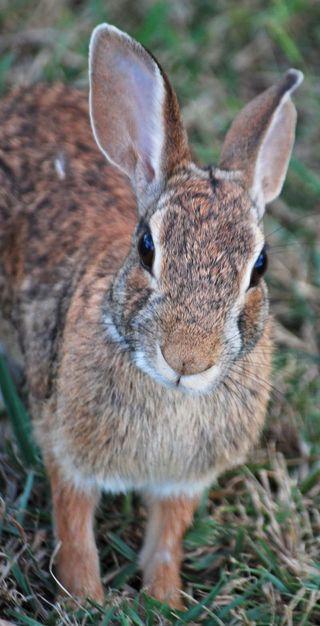 RabbitSep3