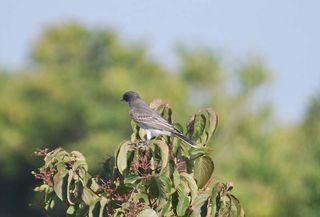 BirdSep6a