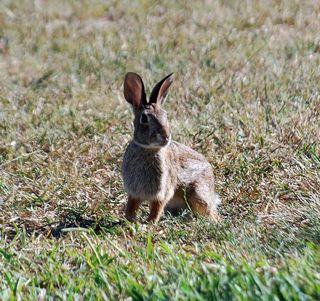 RabbitSep9