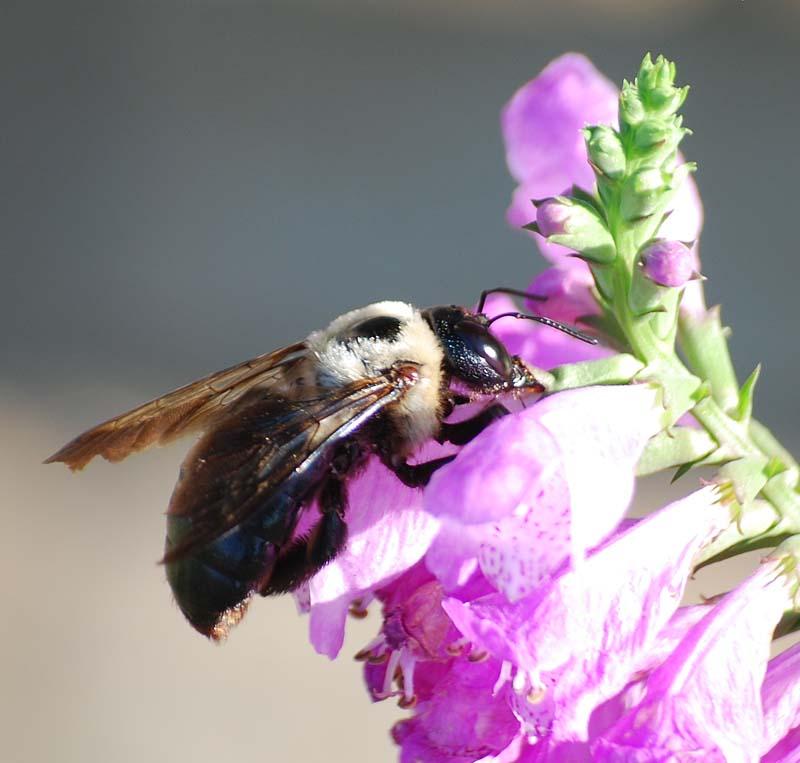 Bee15