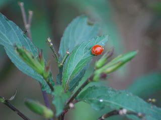 LadybugDec8