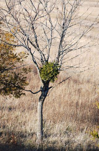 TreeDec29