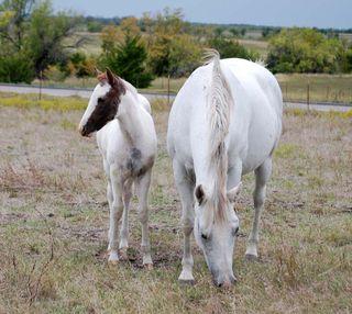 HorseOct6a