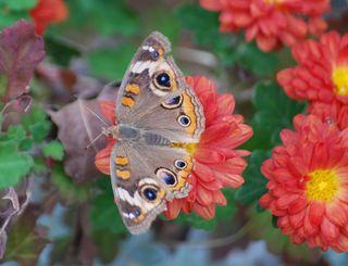 ButterflyDec8