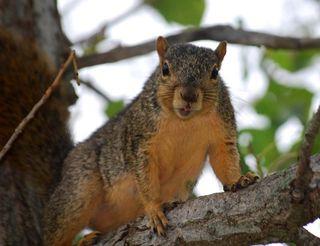 SquirrelAug25