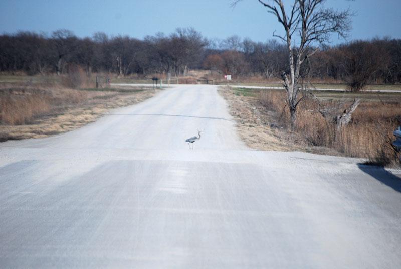 Heronroad