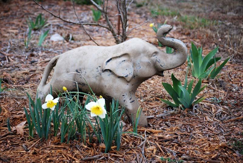 ElephantMar9