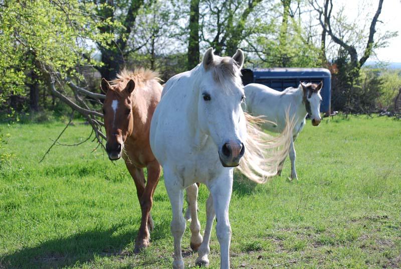 HorsesApr21b