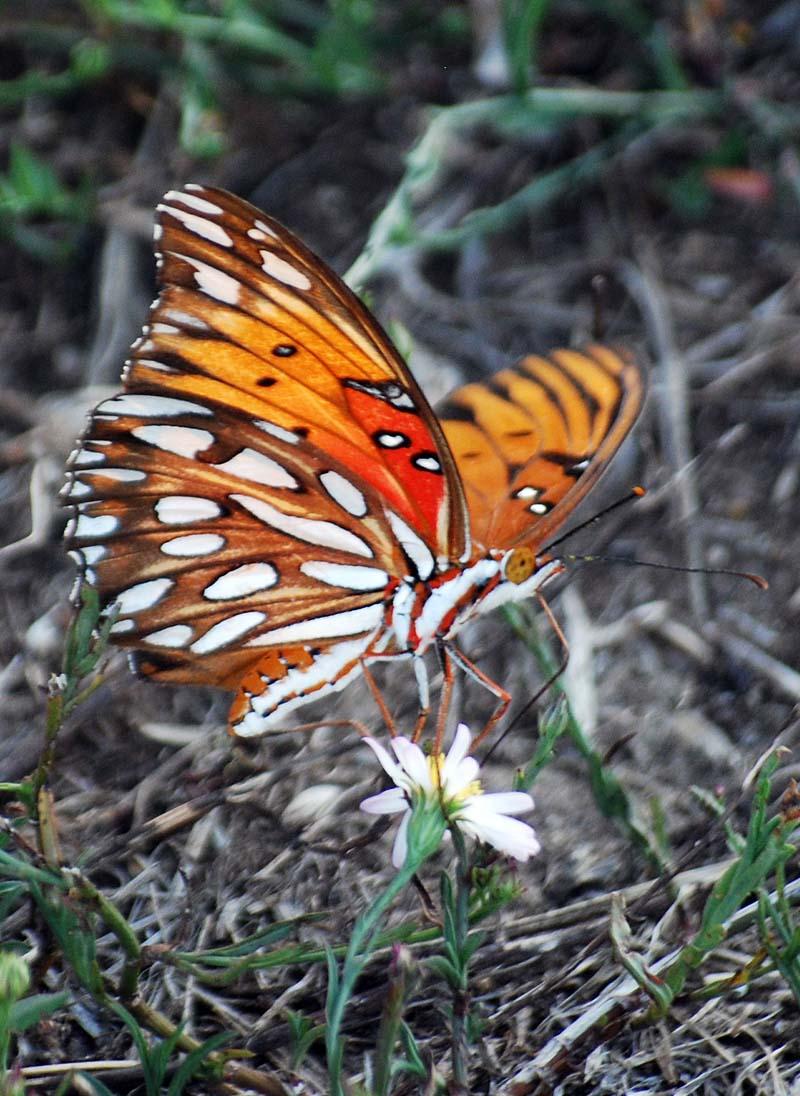 ButterflySep26