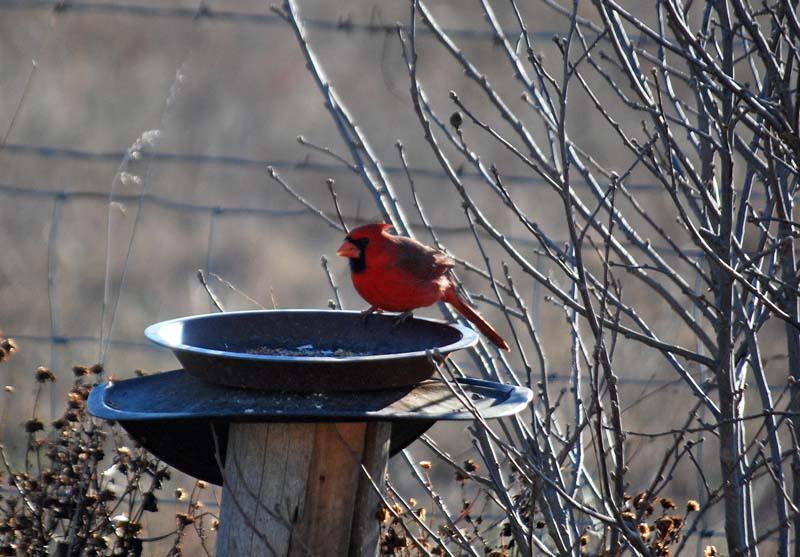 CardinalFeb2