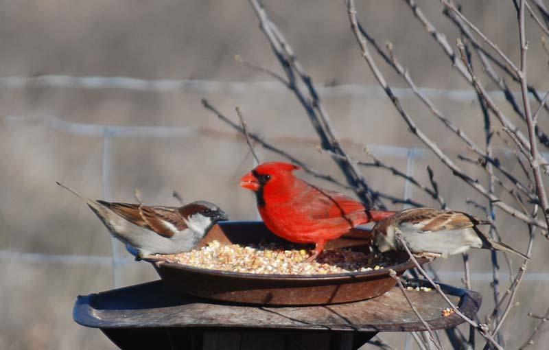 BirdsMar2a