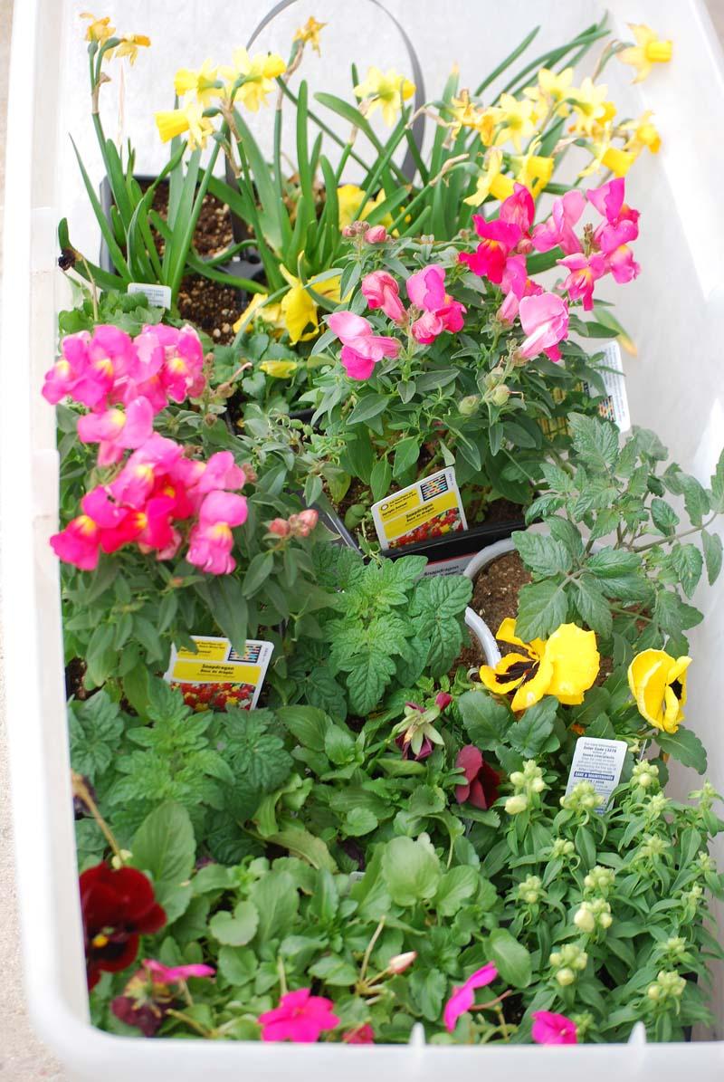 PlantsMar19