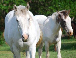 HorsesMay8