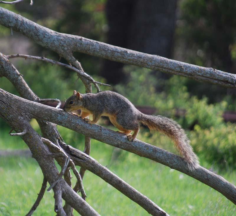 SquirrelApr25