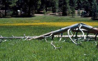 Horseshoemeadow