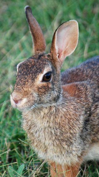 RabbitJul23