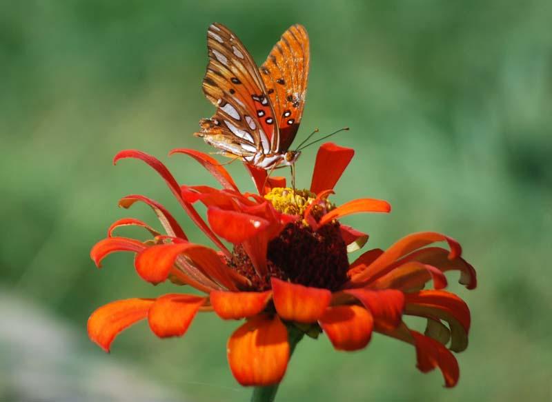 ButterflyAug18