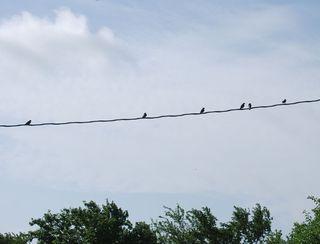 BirdsJun25