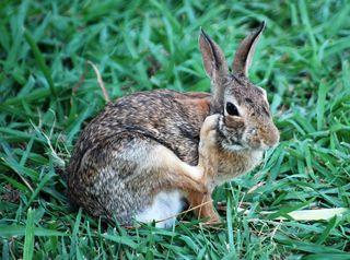 RabbitJul7