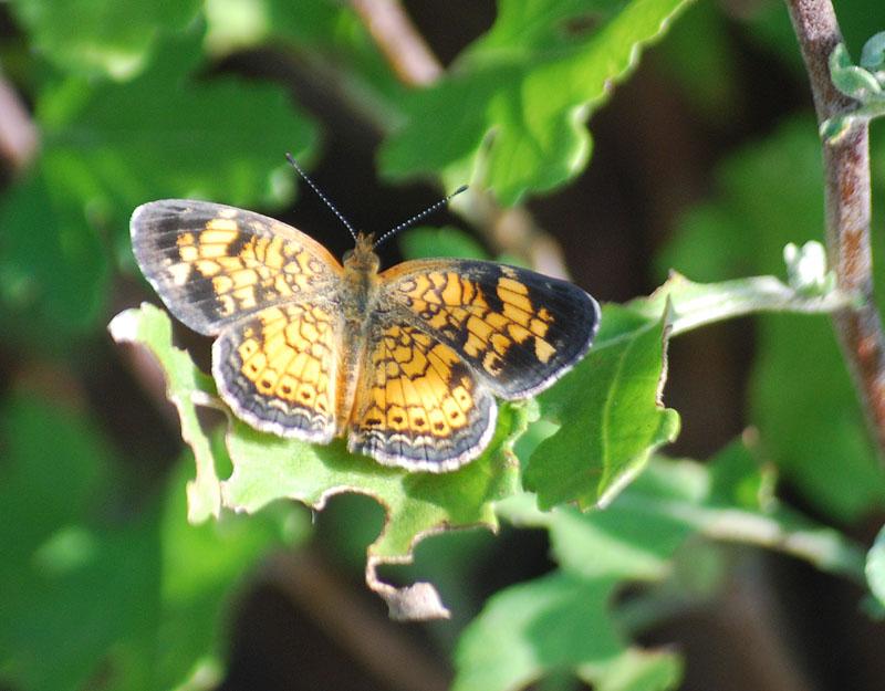 ButterflyJul23