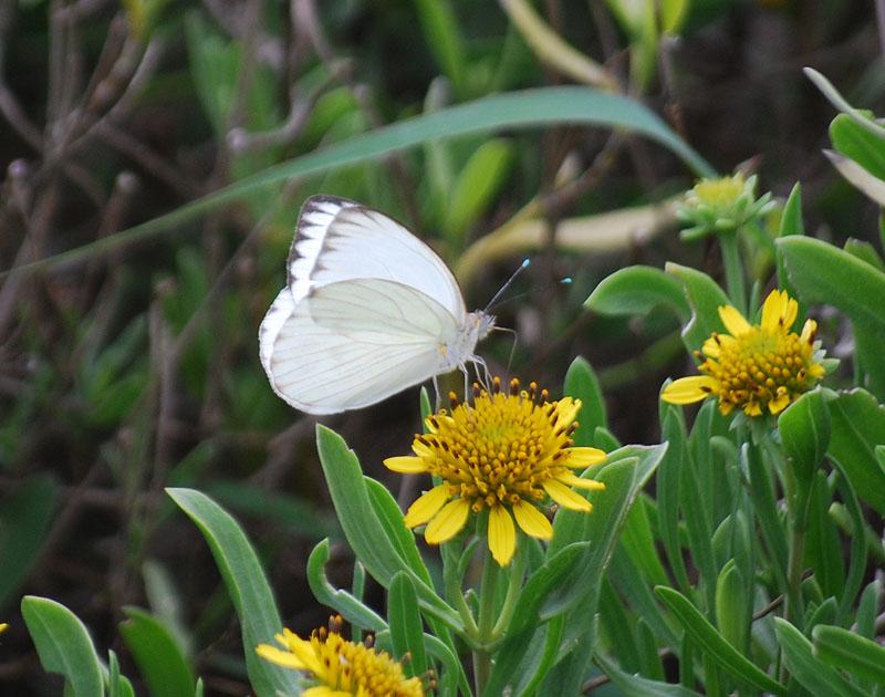 Butterflybest