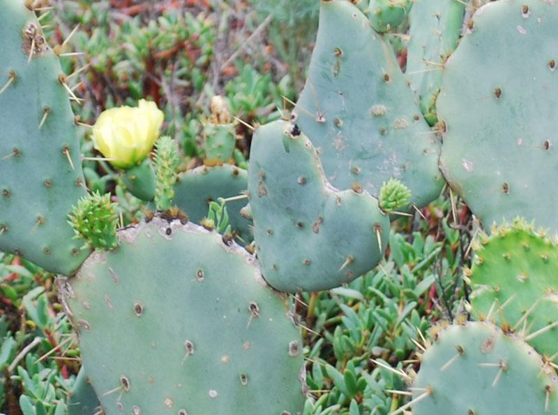Cactus2_edited-1