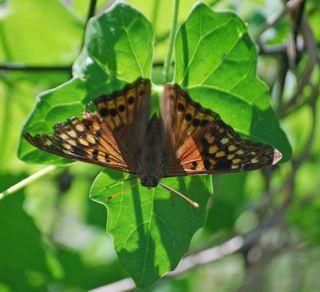 ButterflyJun2