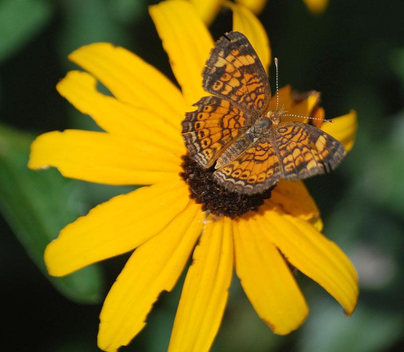ButterflyJul24