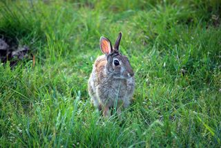 RabbitAp30a