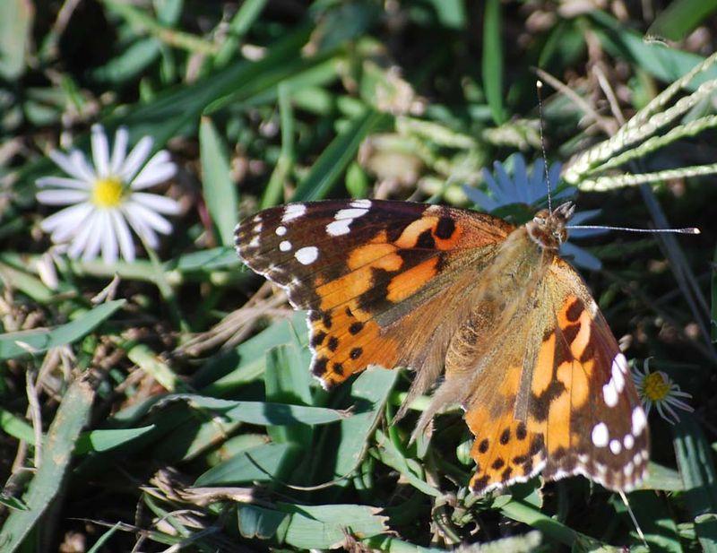 ButterflyOct19