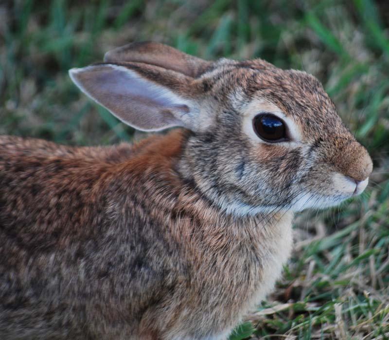 RabbitSep3a