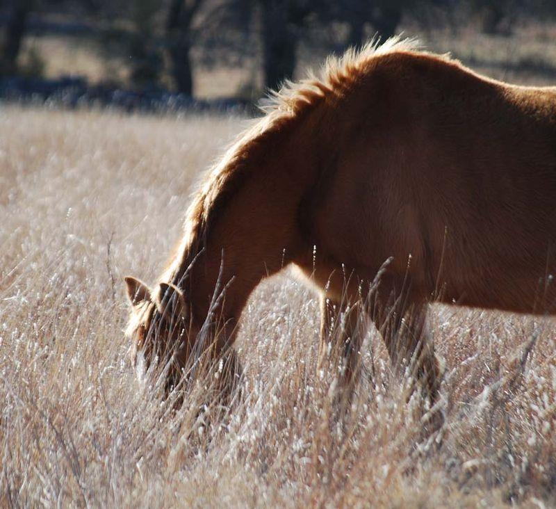 HorseJan26a