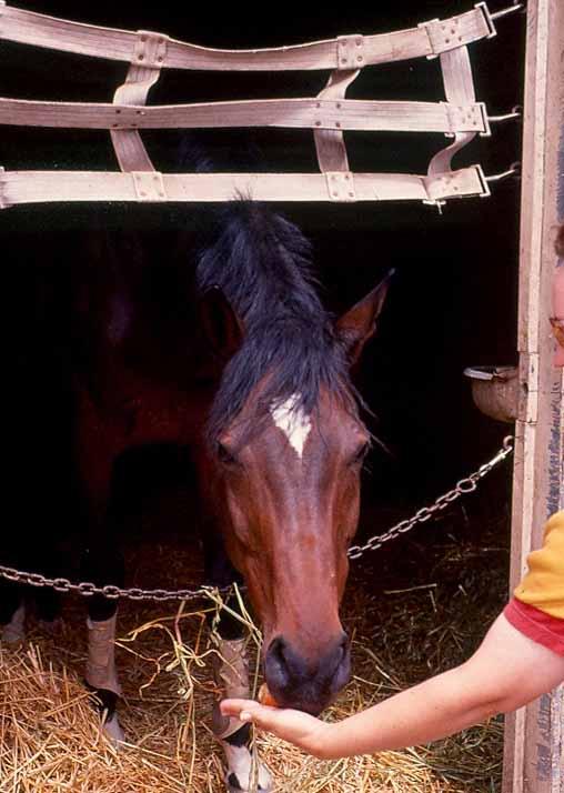Horse SF