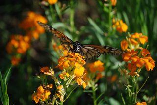 ButterflyAp18f