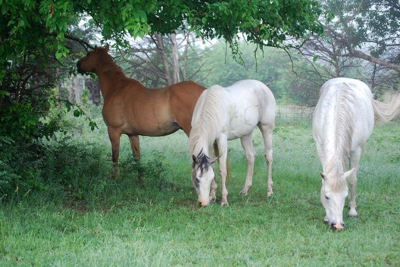 HorsesMay28