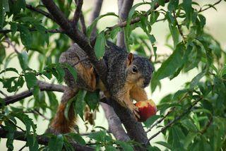 SquirrelJul12e