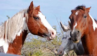 Horsesummer4