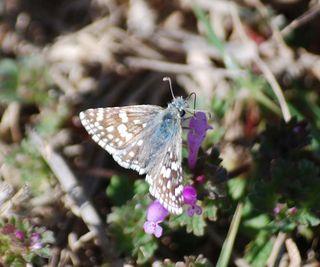 ButterflyMar19e