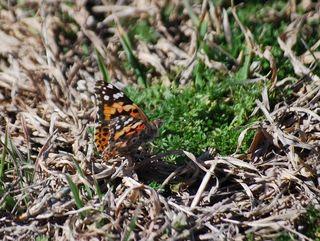 ButterflyMar19b