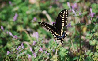 ButterflyAp3b