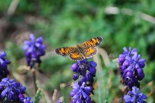 ButterflyAp3c
